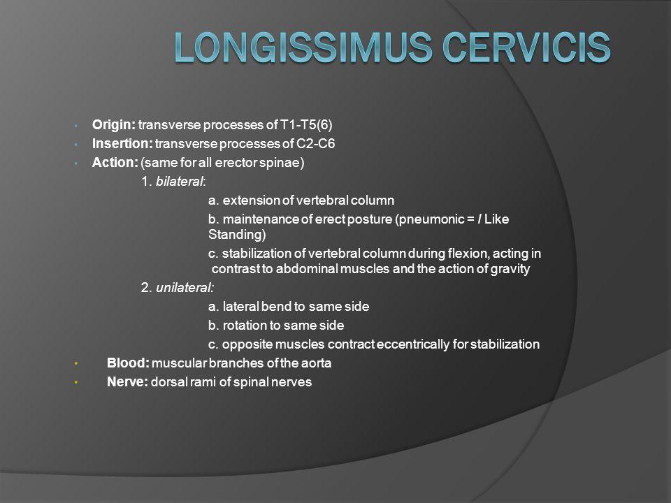 Origin: transverse processes of T1-T5(6) Insertion: transverse processes of C2-C6 Action: (same for all erector spinae) 1.