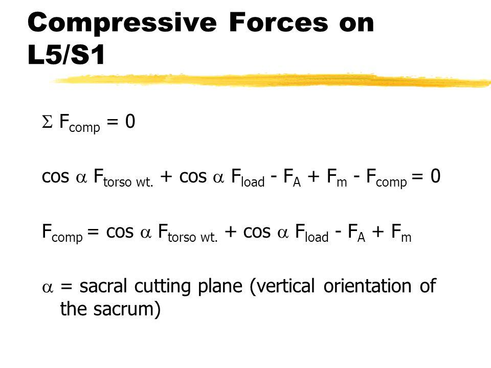 Compressive Forces on L5/S1  F comp = 0 cos  F torso wt. + cos  F load - F A + F m - F comp = 0 F comp = cos  F torso wt. + cos  F load - F A + F