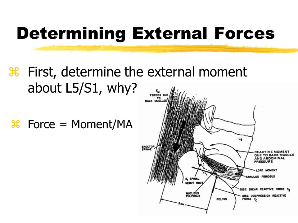 Determining External Forces zFirst, determine the external moment about L5/S1, why.