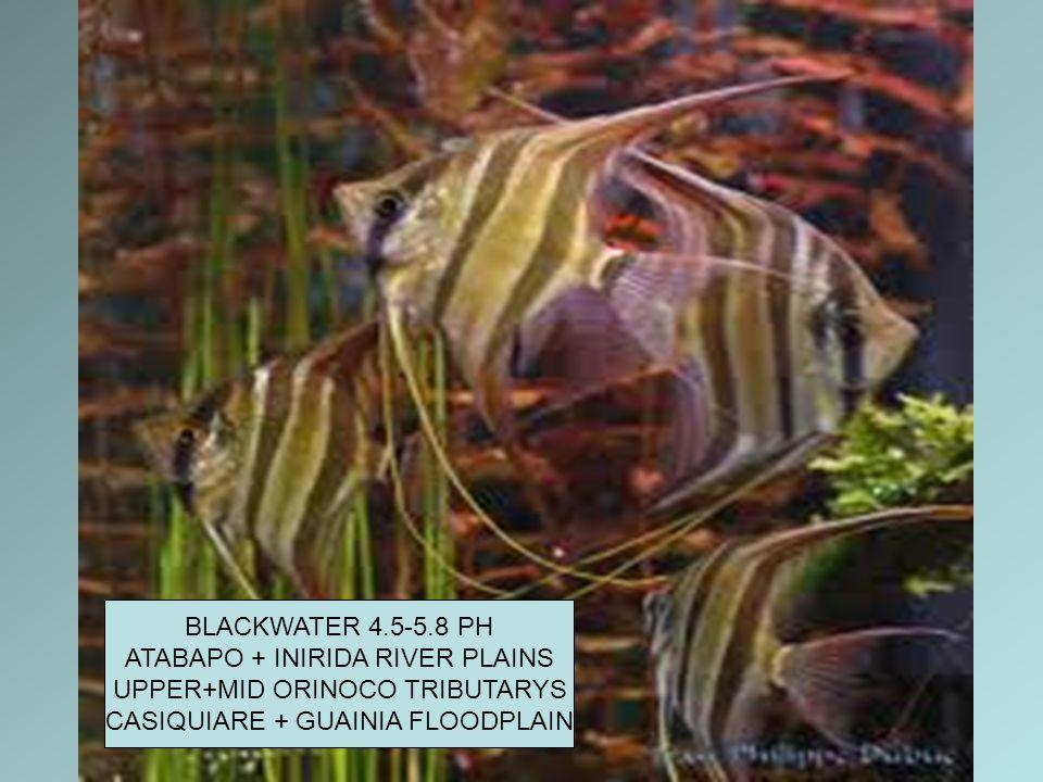 BLACKWATER 4.5-5.8 PH ATABAPO + INIRIDA RIVER PLAINS UPPER+MID ORINOCO TRIBUTARYS CASIQUIARE + GUAINIA FLOODPLAIN