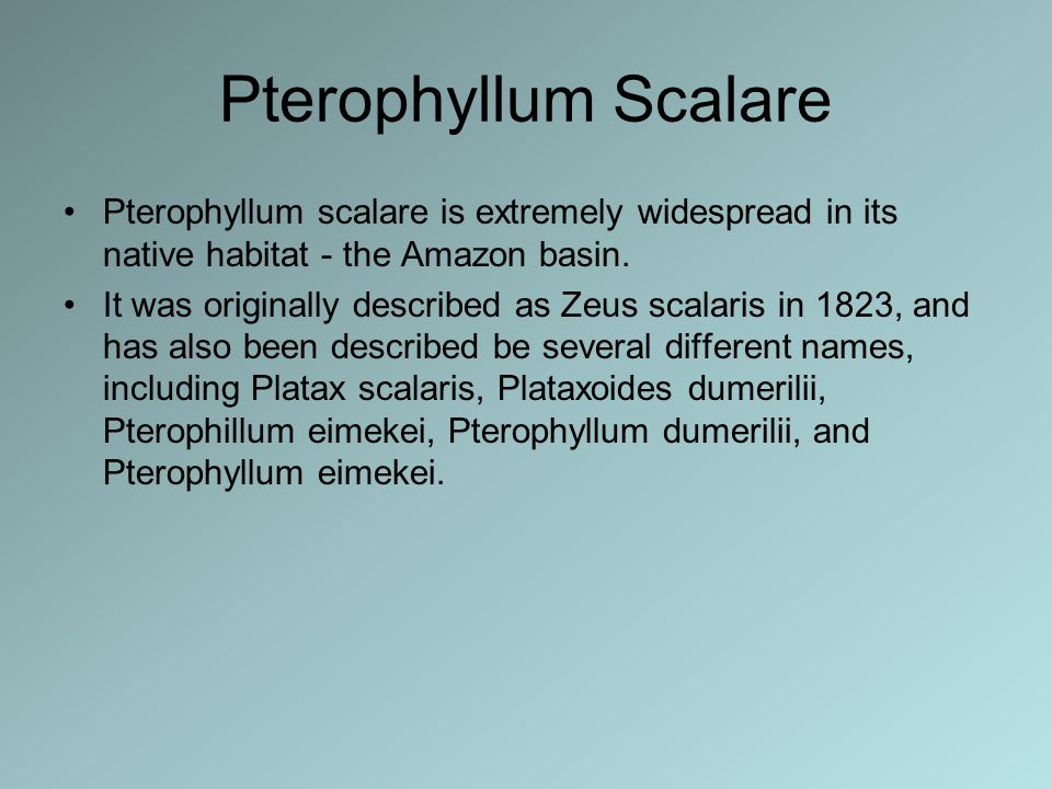 Pterophyllum Scalare Pterophyllum scalare is extremely widespread in its native habitat - the Amazon basin. It was originally described as Zeus scalar