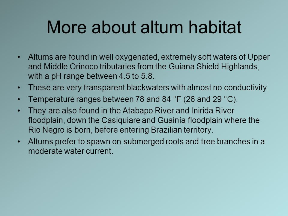 More about altum habitat Altums are found in well oxygenated, extremely soft waters of Upper and Middle Orinoco tributaries from the Guiana Shield Highlands, with a pH range between 4.5 to 5.8.