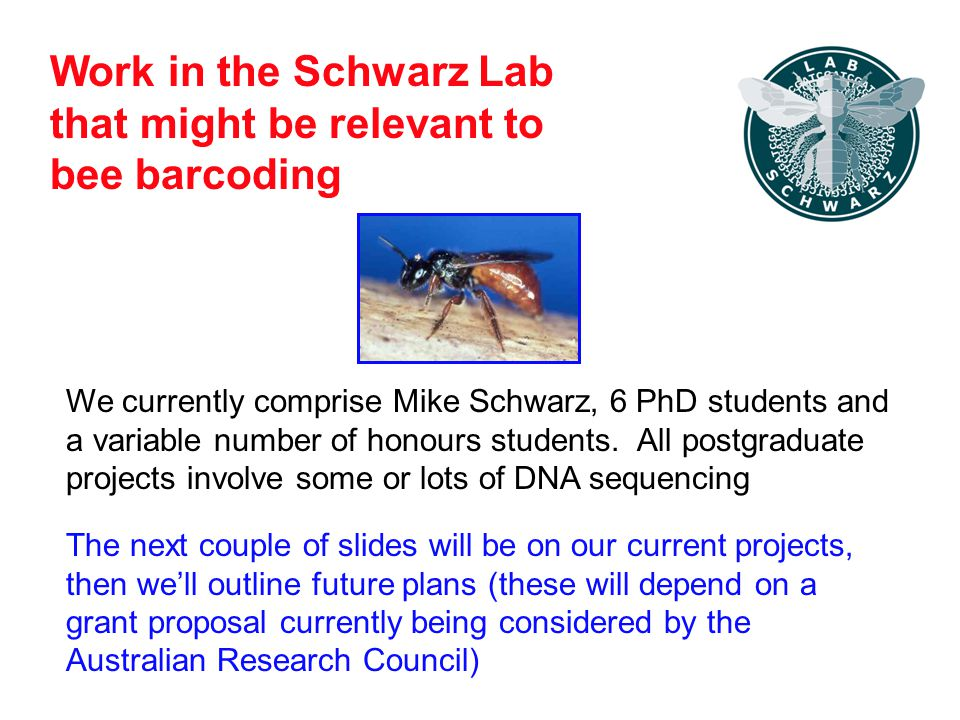 Work in the Schwarz Lab that might be relevant to bee barcoding We currently comprise Mike Schwarz, 6 PhD students and a variable number of honours students.
