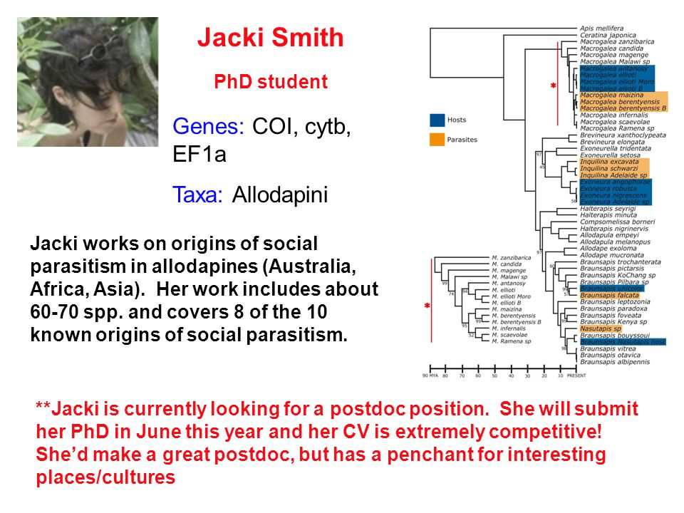 Jacki Smith PhD student Jacki works on origins of social parasitism in allodapines (Australia, Africa, Asia).