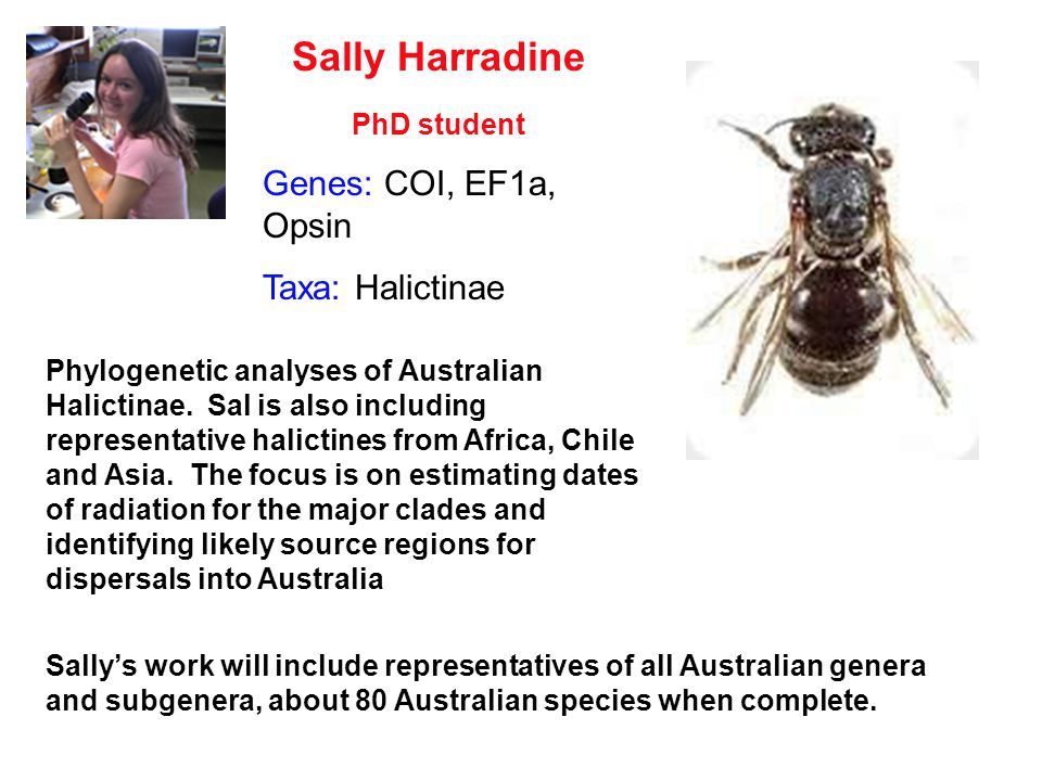 Sally Harradine PhD student Phylogenetic analyses of Australian Halictinae. Sal is also including representative halictines from Africa, Chile and Asi