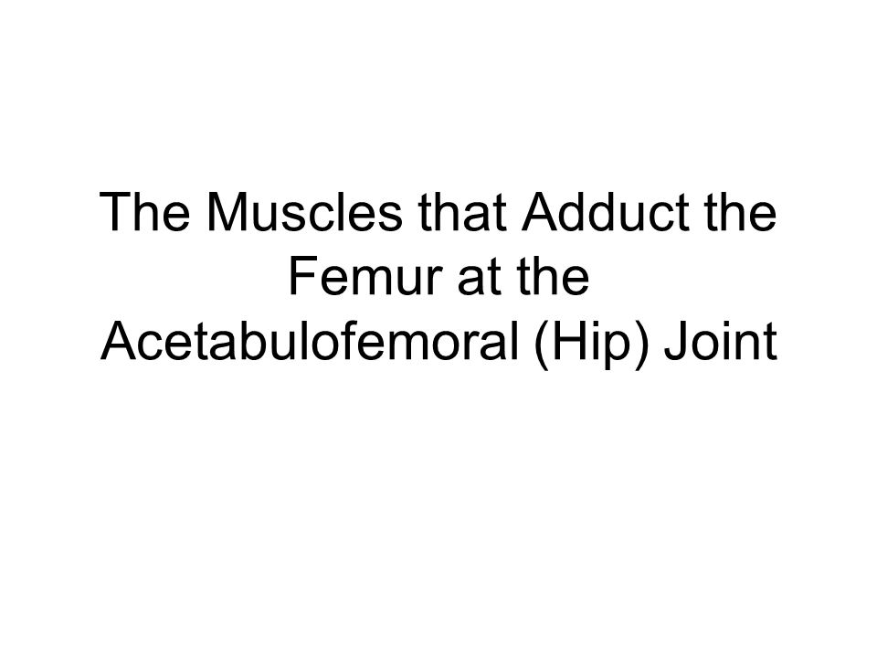 The Muscles that Adduct the Femur at the Acetabulofemoral (Hip) Joint