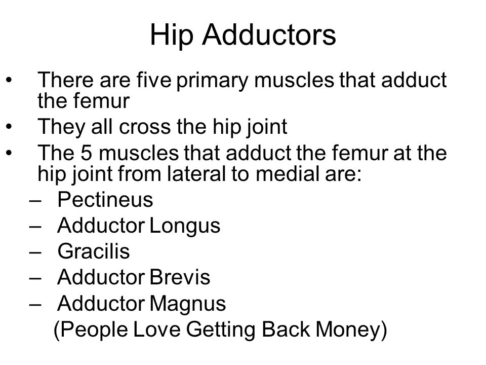 Hip Adductors There are five primary muscles that adduct the femur They all cross the hip joint The 5 muscles that adduct the femur at the hip joint from lateral to medial are: –Pectineus –Adductor Longus –Gracilis –Adductor Brevis –Adductor Magnus (People Love Getting Back Money)
