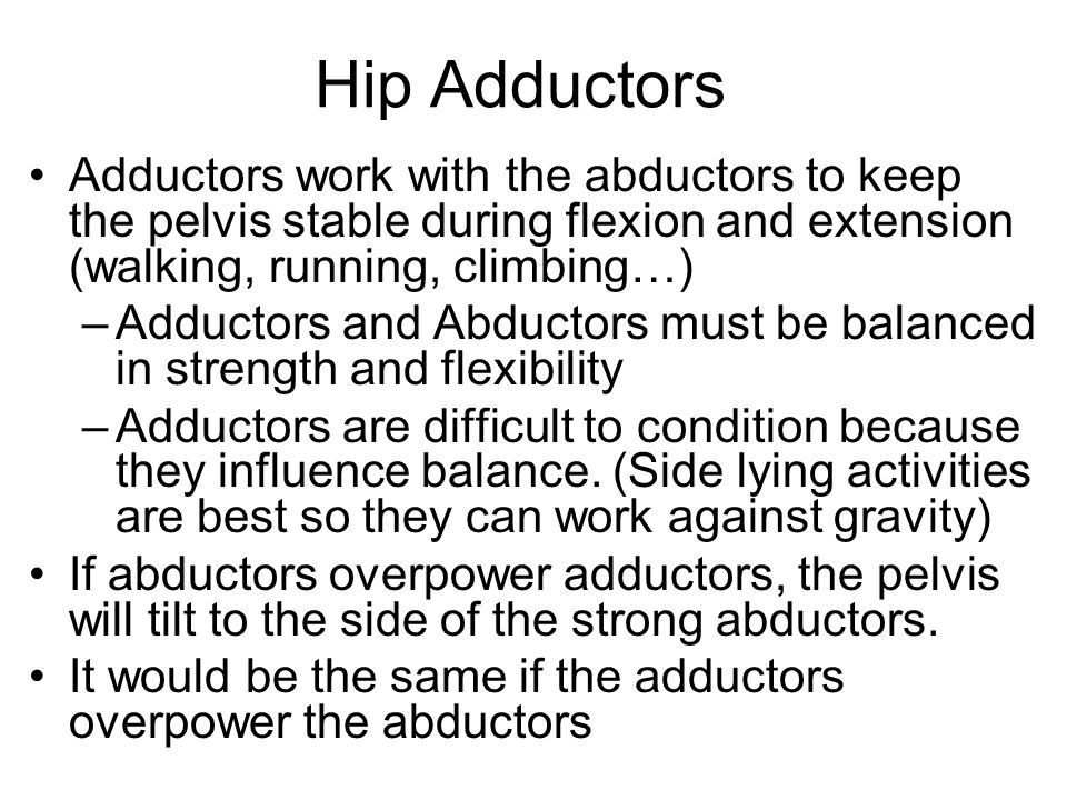 Hip Adductors Adductors work with the abductors to keep the pelvis stable during flexion and extension (walking, running, climbing…) –Adductors and Abductors must be balanced in strength and flexibility –Adductors are difficult to condition because they influence balance.