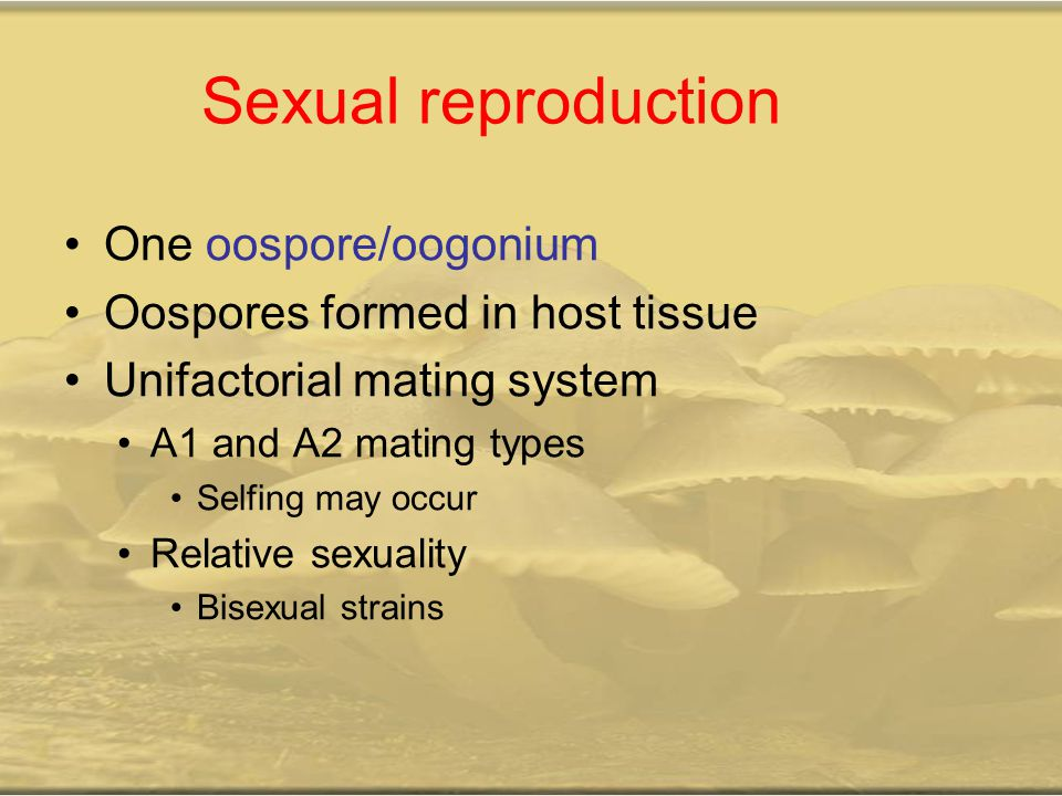 Sexual reproduction One oospore/oogonium Oospores formed in host tissue Unifactorial mating system A1 and A2 mating types Selfing may occur Relative sexuality Bisexual strains