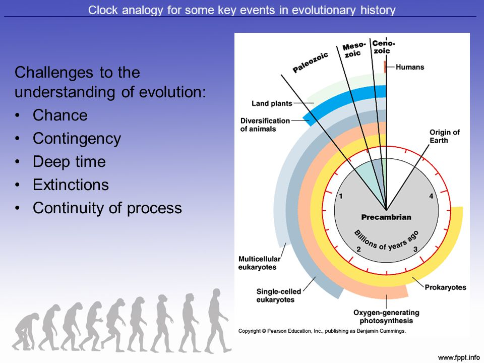 Clock analogy for some key events in evolutionary history Challenges to the understanding of evolution: Chance Contingency Deep time Extinctions Conti