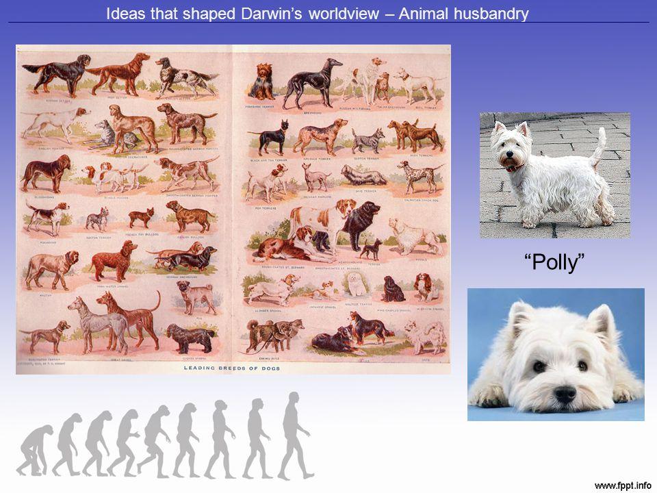 "Ideas that shaped Darwin's worldview – Animal husbandry ""Polly"""