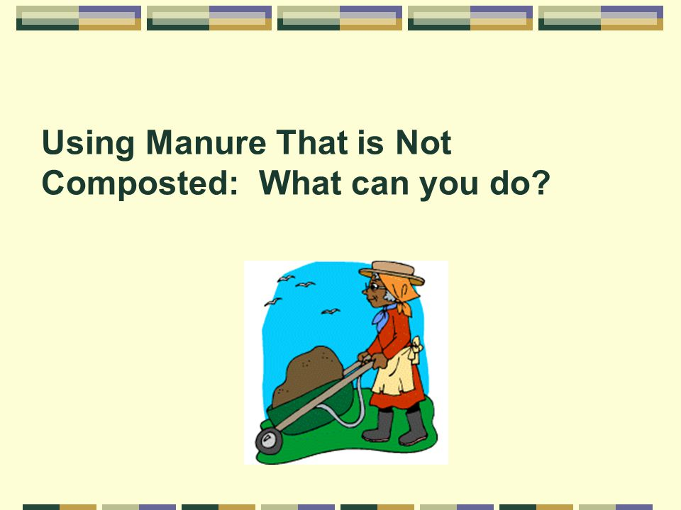 Using Manure That is Not Composted: What can you do