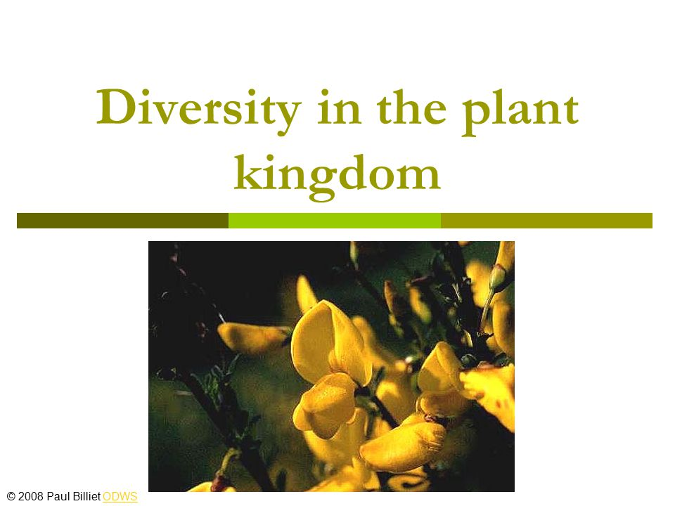 Bryophyta  Small terrestrial plants restricted to damp habitats  Water is needed for fertilisation  Spores ensure dispersal © 2008 Paul Billiet ODWSODWS