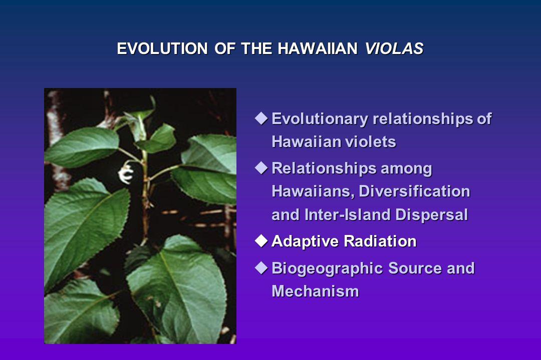 EVOLUTION OF THE HAWAIIAN VIOLAS  Evolutionary relationships of Hawaiian violets  Relationships among Hawaiians, Diversification and Inter-Island Di