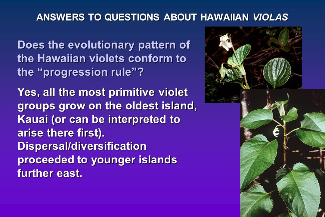 """ANSWERS TO QUESTIONS ABOUT HAWAIIAN VIOLAS Does the evolutionary pattern of the Hawaiian violets conform to the """"progression rule""""? Yes, all the most"""