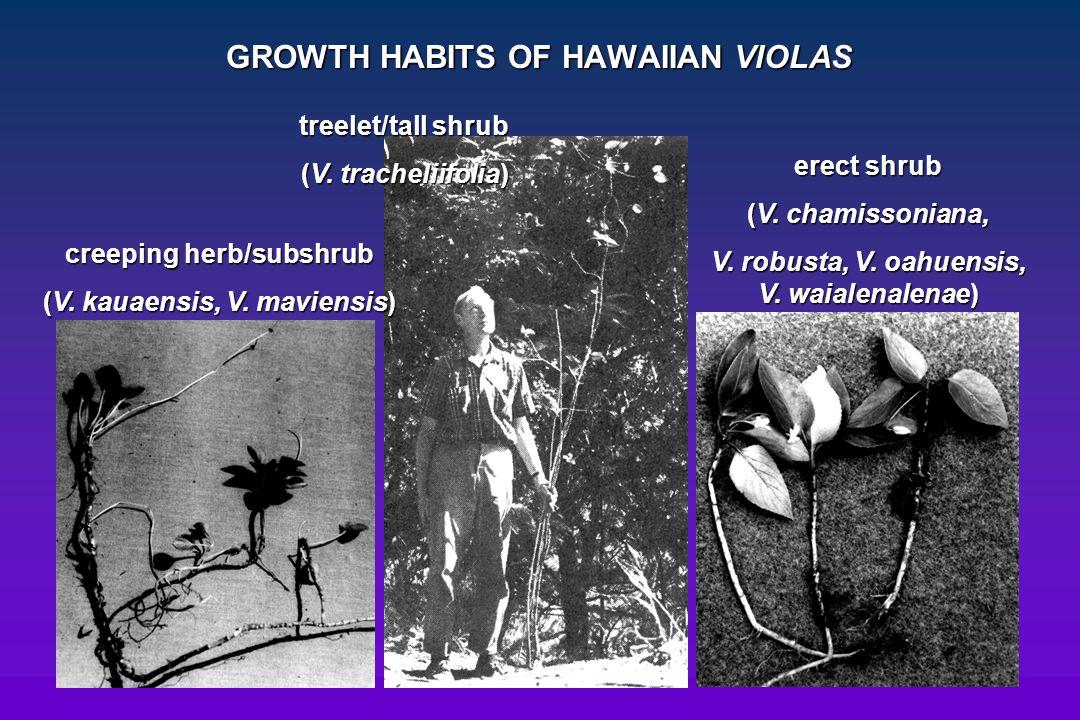 GROWTH HABITS OF HAWAIIAN VIOLAS treelet/tall shrub (V. tracheliifolia) creeping herb/subshrub (V. kauaensis, V. maviensis) erect shrub (V. chamissoni