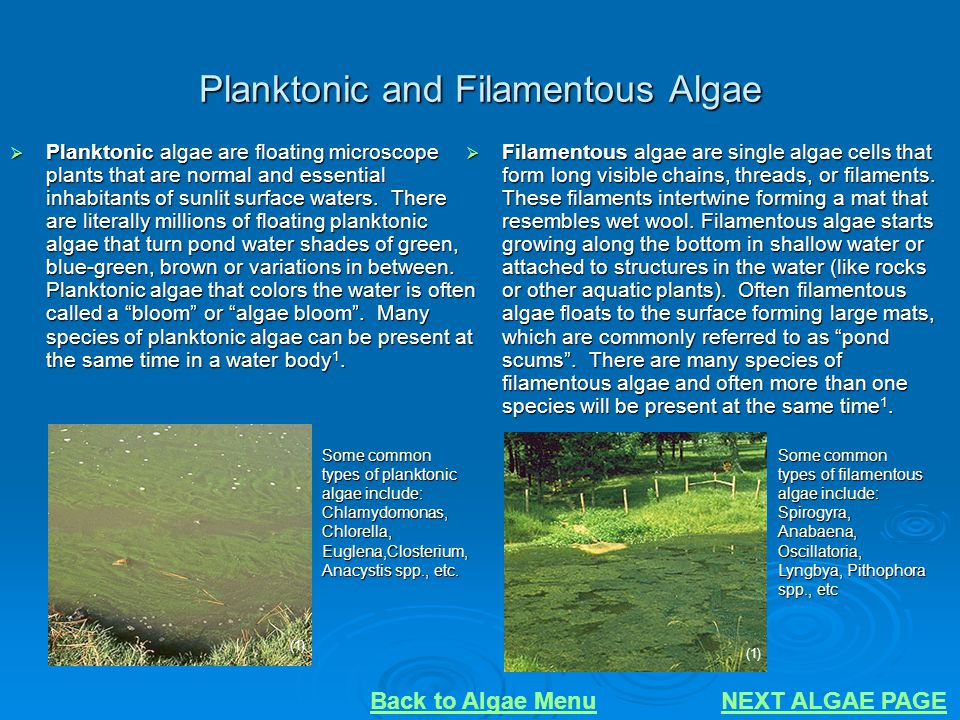Planktonic and Filamentous Algae  Planktonic algae are floating microscope plants that are normal and essential inhabitants of sunlit surface waters.