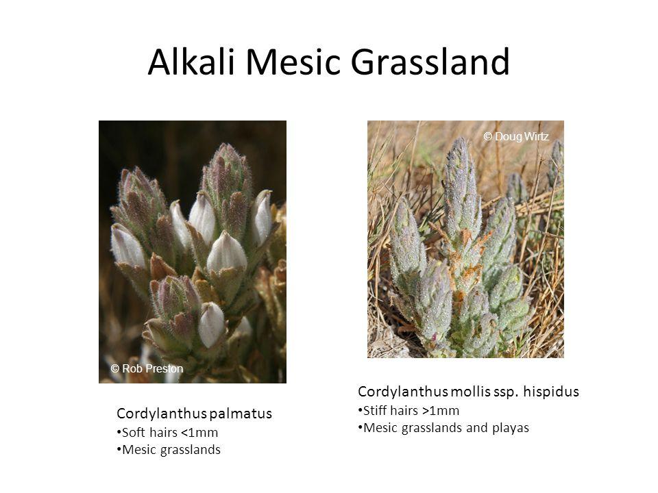 Alkali Mesic Grassland Cordylanthus palmatus Soft hairs <1mm Mesic grasslands Cordylanthus mollis ssp.