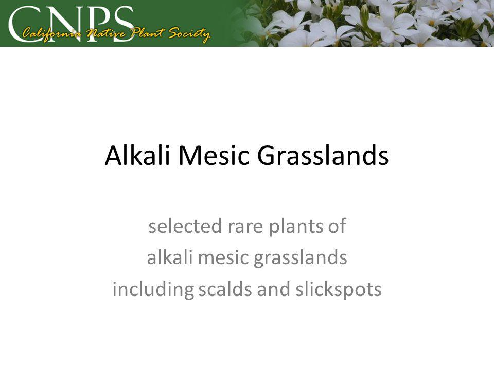 Alkali Mesic Grasslands selected rare plants of alkali mesic grasslands including scalds and slickspots
