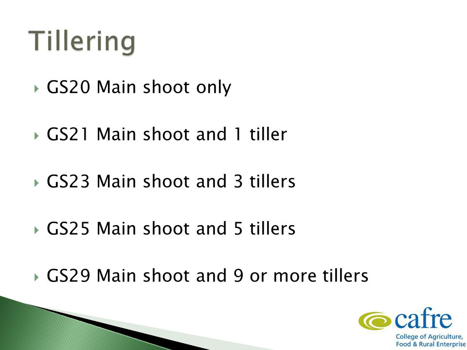  GS20 Main shoot only  GS21 Main shoot and 1 tiller  GS23 Main shoot and 3 tillers  GS25 Main shoot and 5 tillers  GS29 Main shoot and 9 or more tillers