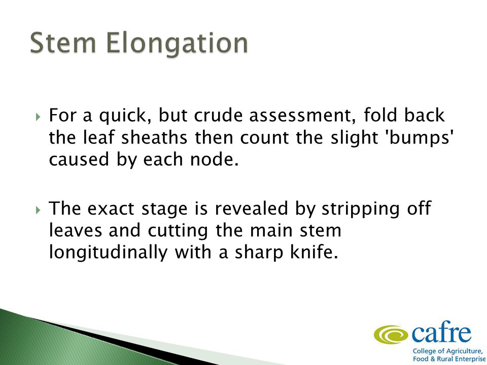  For a quick, but crude assessment, fold back the leaf sheaths then count the slight bumps caused by each node.