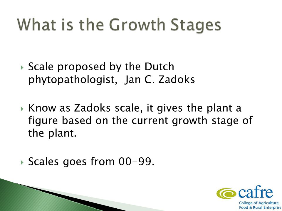  Knowing the growth stage is important to ensure that timing of pesticides are applied in line with manufactures recommendations.