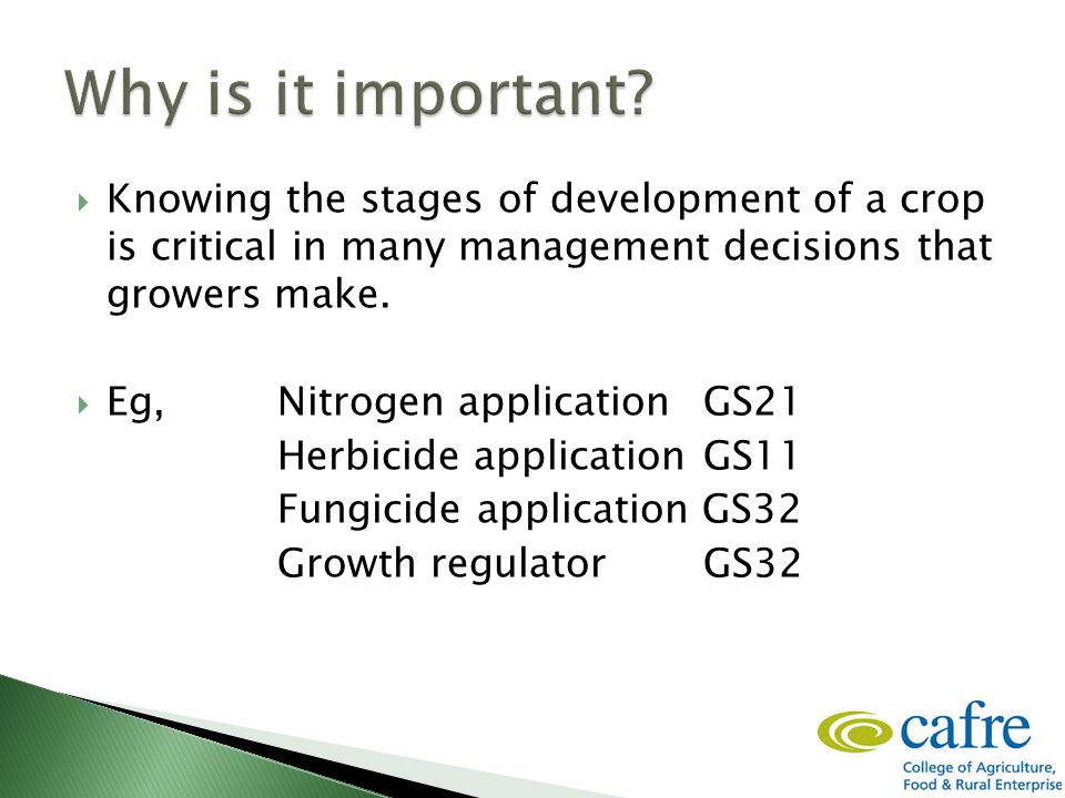  Knowing the stages of development of a crop is critical in many management decisions that growers make.