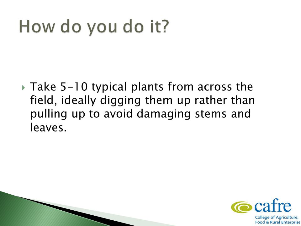  Take 5-10 typical plants from across the field, ideally digging them up rather than pulling up to avoid damaging stems and leaves.