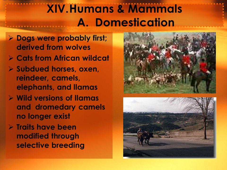 XIV.Humans & Mammals A.