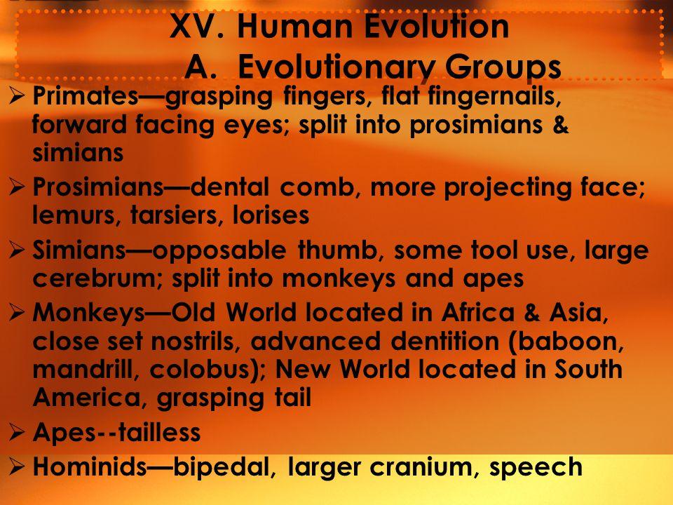XV.Human Evolution A.