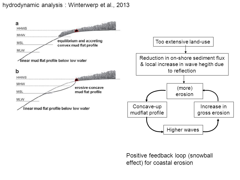 Positive feedback loop (snowball effect) for coastal erosion Too extensive land-use Reduction in on-shore sediment flux & local increase in wave hegith due to reflection (more) erosion Concave-up mudflat profile Higher waves Increase in gross erosion hydrodynamic analysis : Winterwerp et al., 2013