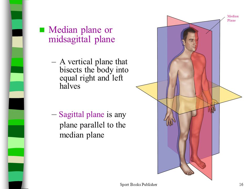 Sport Books Publisher16 Median plane or midsagittal plane –A vertical plane that bisects the body into equal right and left halves – Sagittal plane is any plane parallel to the median plane Median Plane