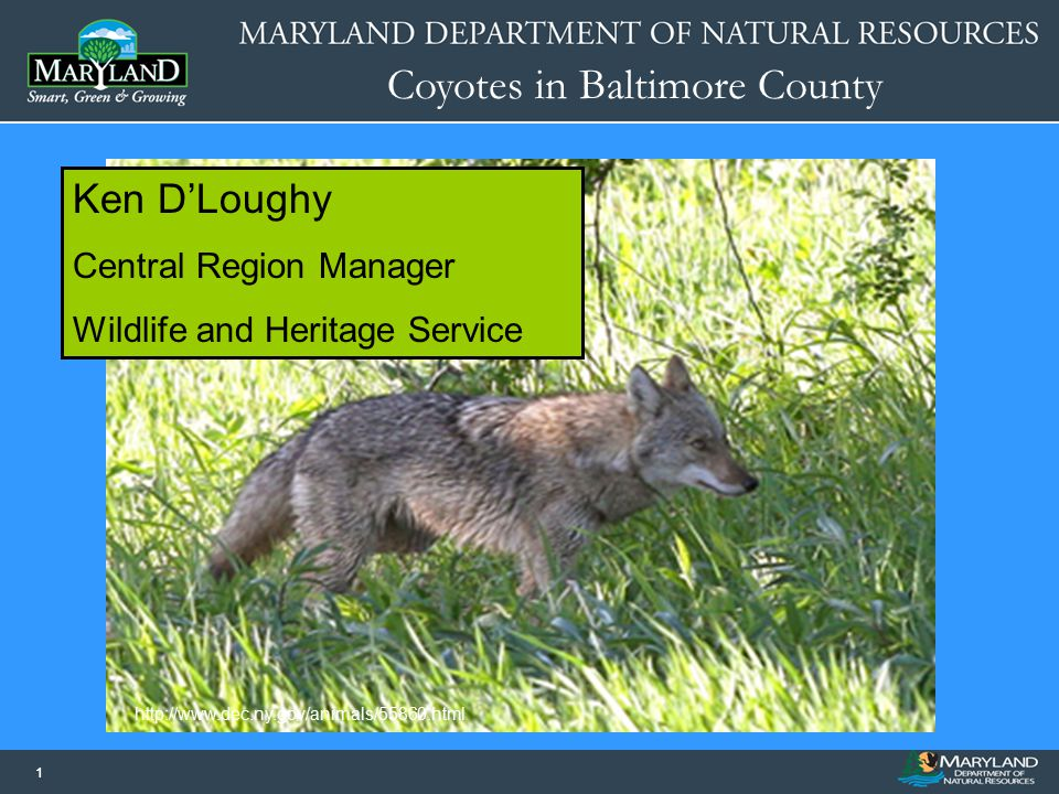 Coyotes in Baltimore County 11 Name of Presentation Date of Presentation Image or Graphic http://www.dec.ny.gov/animals/55860.html Ken D'Loughy Centra