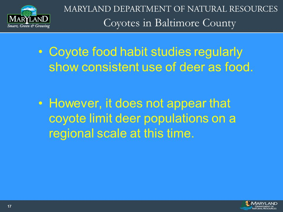 Coyotes in Baltimore County 17 Coyote food habit studies regularly show consistent use of deer as food. However, it does not appear that coyote limit