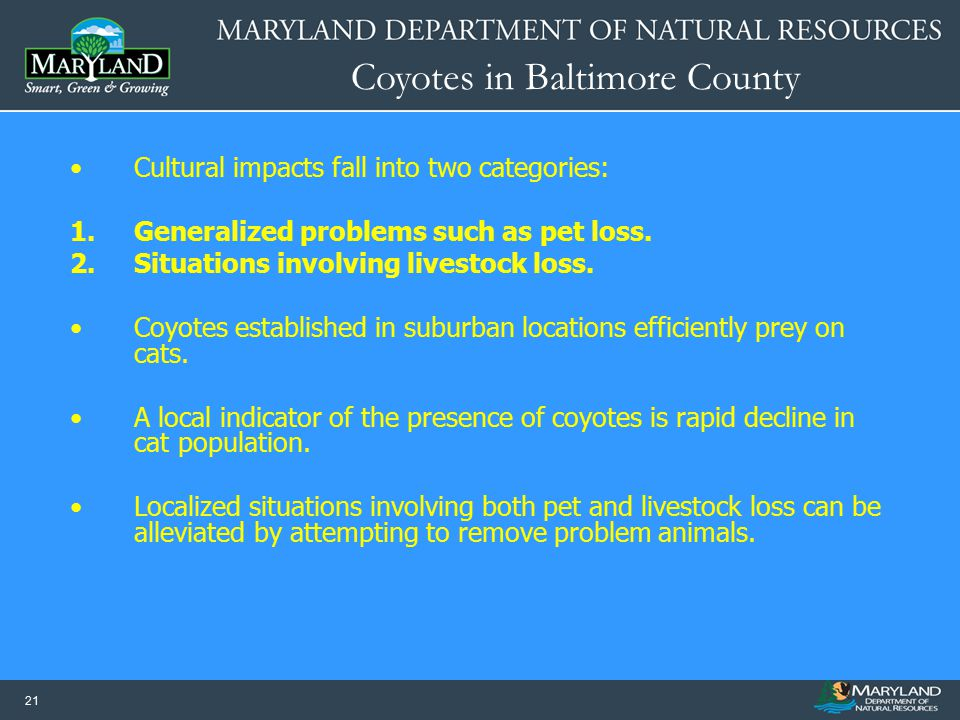 Coyotes in Baltimore County 21 Cultural impacts fall into two categories: 1.Generalized problems such as pet loss. 2.Situations involving livestock lo