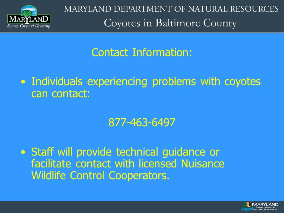 Coyotes in Baltimore County Contact Information: Individuals experiencing problems with coyotes can contact: 877-463-6497 Staff will provide technical