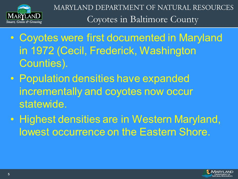 Coyotes in Baltimore County 55 Coyotes were first documented in Maryland in 1972 (Cecil, Frederick, Washington Counties). Population densities have ex