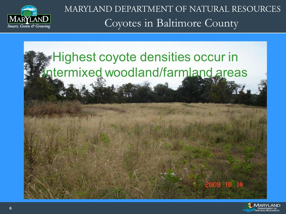 Coyotes in Baltimore County 66 Highest coyote densities occur in intermixed woodland/farmland areas