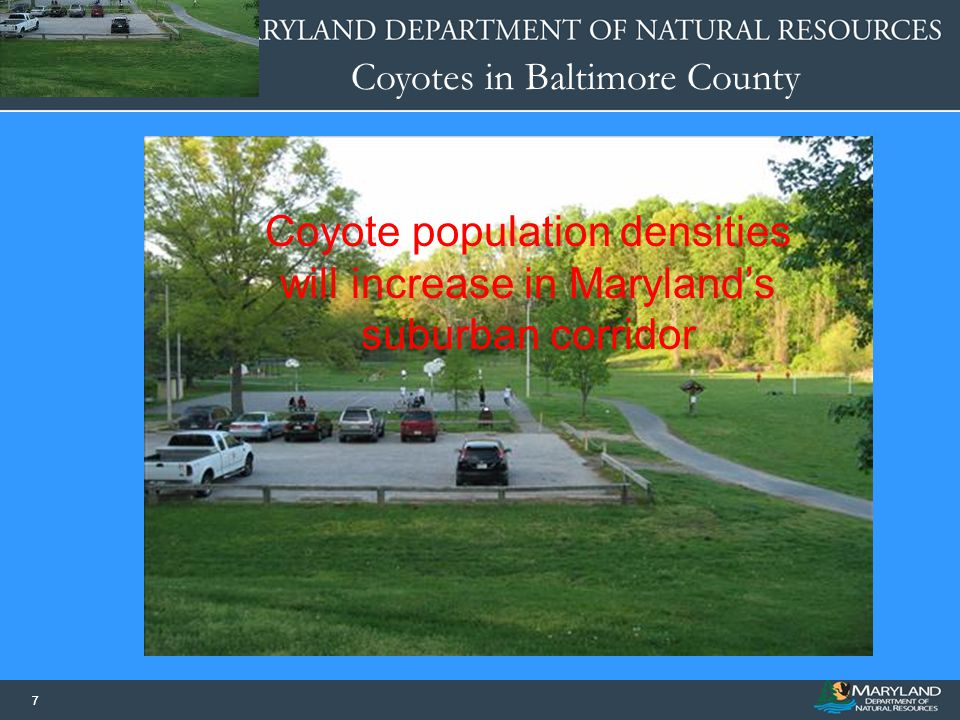 Coyotes in Baltimore County 77 Coyote population densities will increase in Maryland's suburban corridor