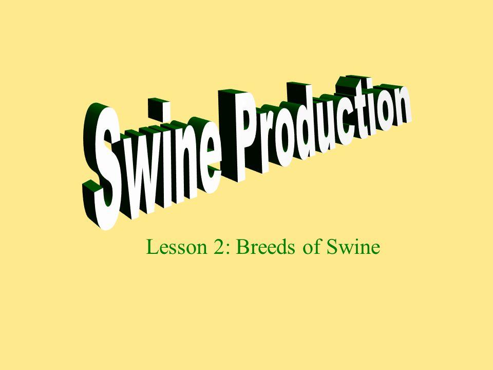 Lesson 2: Breeds of Swine