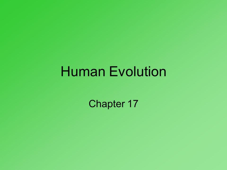 Human Evolution Chapter 17