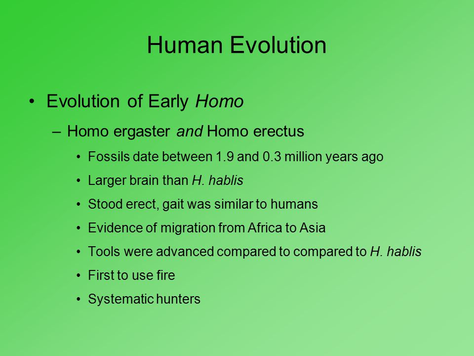 Human Evolution Evolution of Early Homo –Homo ergaster and Homo erectus Fossils date between 1.9 and 0.3 million years ago Larger brain than H. hablis