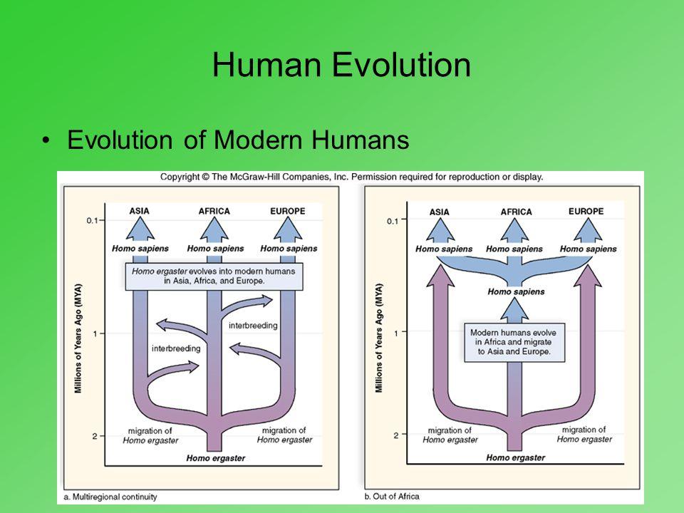 Human Evolution Evolution of Modern Humans