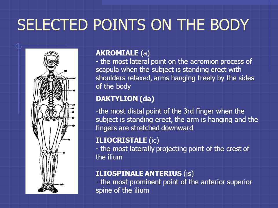 SELECTED POINTS ON THE BODY AKROMIALE (a) - the most lateral point on the acromion process of scapula when the subject is standing erect with shoulders relaxed, arms hanging freely by the sides of the body DAKTYLION (da) -the most distal point of the 3rd finger when the subject is standing erect, the arm is hanging and the fingers are stretched downward ILIOCRISTALE (ic) - the most laterally projecting point of the crest of the ilium ILIOSPINALE ANTERIUS (is) - the most prominent point of the anterior superior spine of the ilium