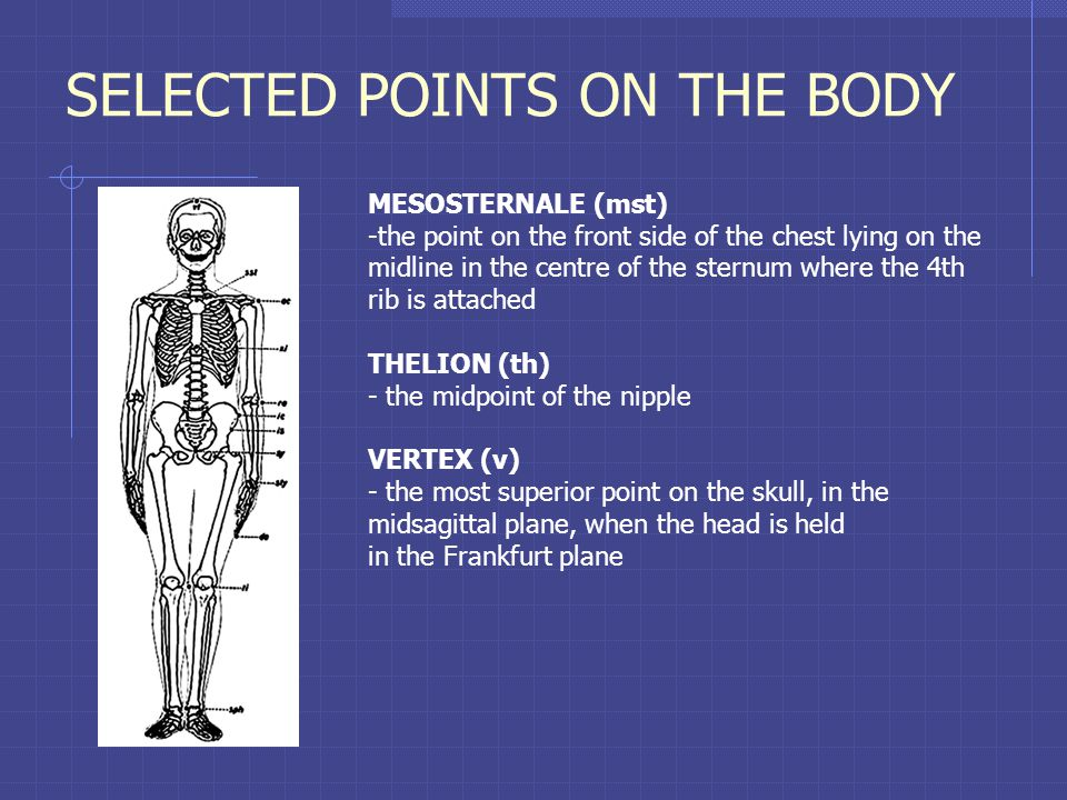 SELECTED POINTS ON THE BODY MESOSTERNALE (mst) -the point on the front side of the chest lying on the midline in the centre of the sternum where the 4th rib is attached THELION (th) - the midpoint of the nipple VERTEX (v) - the most superior point on the skull, in the midsagittal plane, when the head is held in the Frankfurt plane