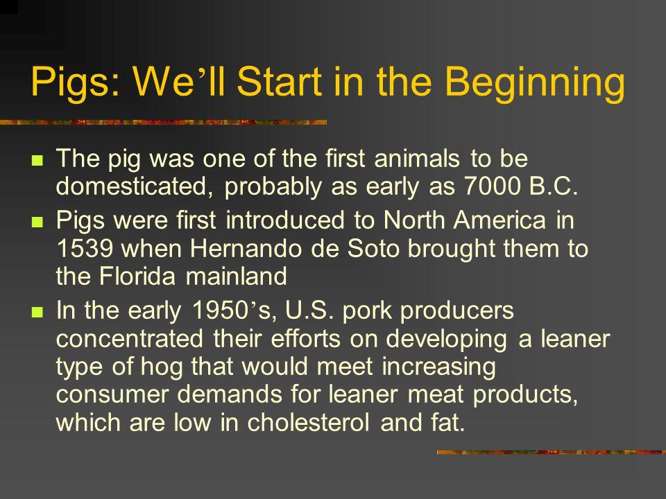Landrace Newer breed in the U.S.Descendants of Danish Landrace hogs.