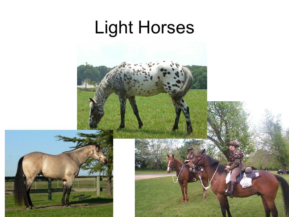 Light Horses