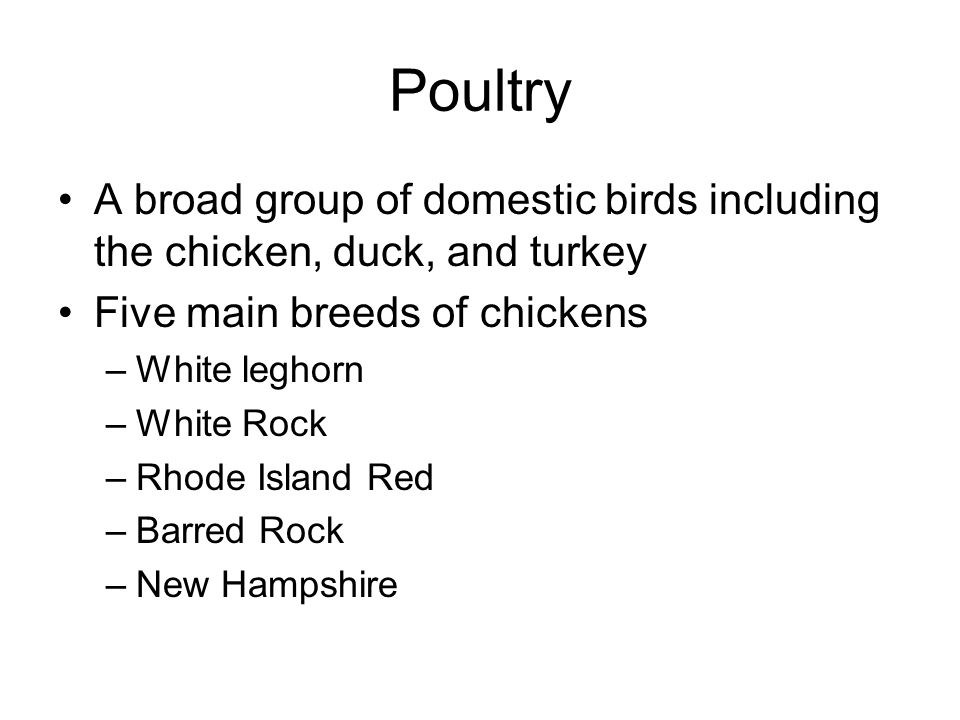Poultry A broad group of domestic birds including the chicken, duck, and turkey Five main breeds of chickens –White leghorn –White Rock –Rhode Island Red –Barred Rock –New Hampshire