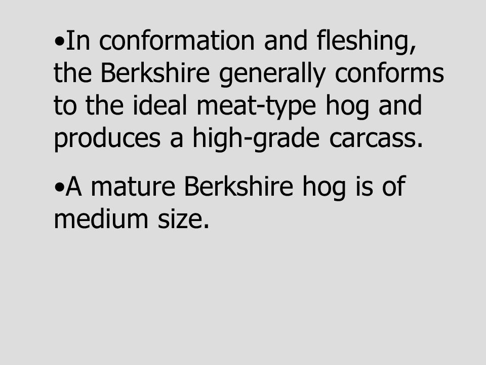 In conformation and fleshing, the Berkshire generally conforms to the ideal meat-type hog and produces a high-grade carcass. A mature Berkshire hog is