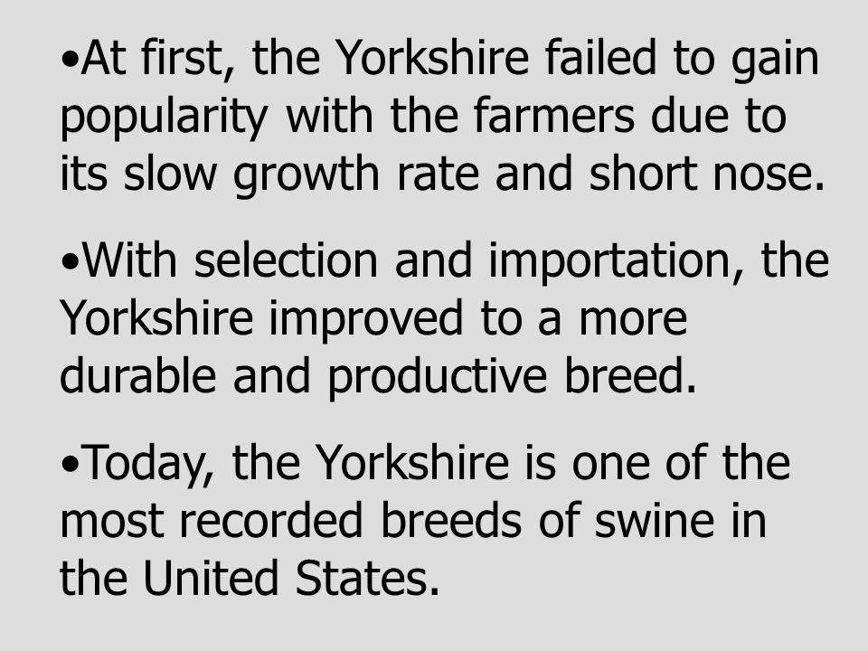 At first, the Yorkshire failed to gain popularity with the farmers due to its slow growth rate and short nose. With selection and importation, the Yor